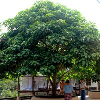 Sukhesikarama Mindfulness Forest