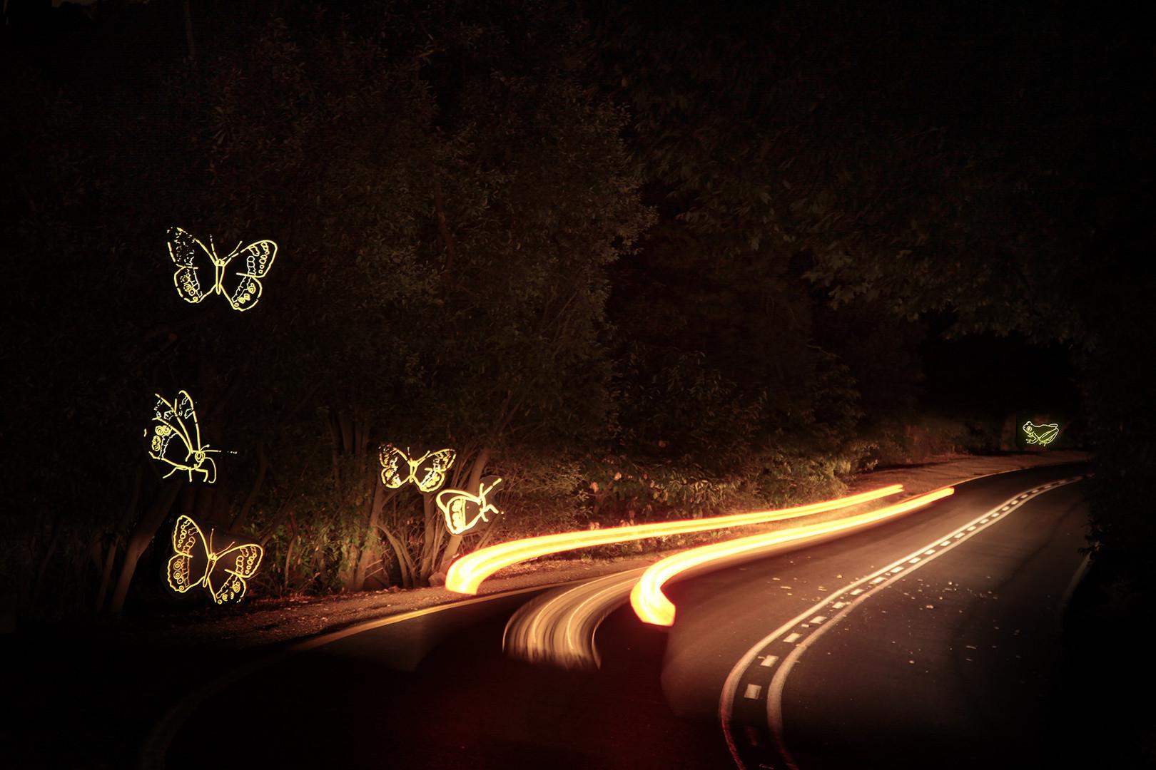 Butterflies + Frog