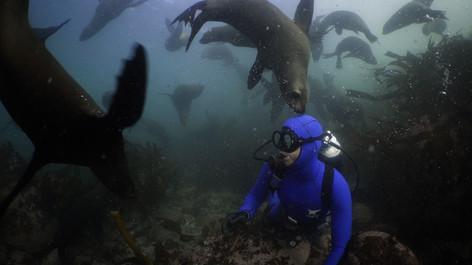 Steve Benjamin   PARALENZ Ocean Icon