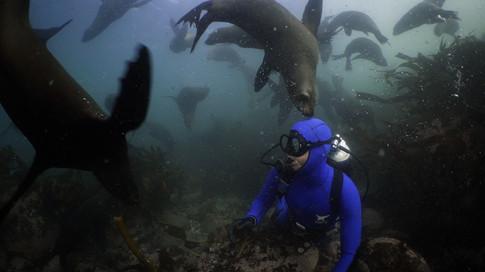 Steve Benjamin | PARALENZ Ocean Icon