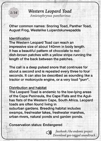 leopard toad_back.jpg