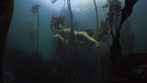 Pippa Ehrlich   PARALENZ Ocean Icon