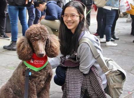DELTA THERAPY DOGS COMING TO PARRAMATTA