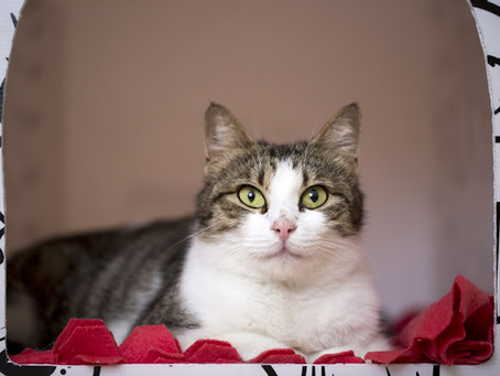 Article - Training is the purrfect solution for Shelter Cats