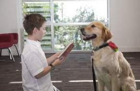 Sydney Classroom Canines training