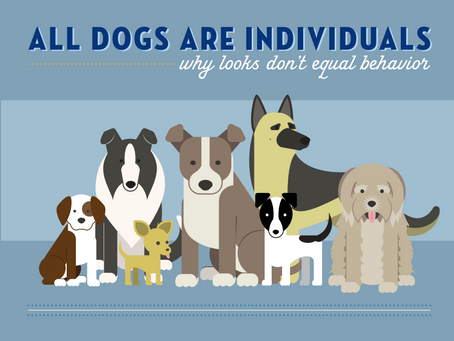 Infographic - All dogs are individuals - Why looks don't determine behaviour