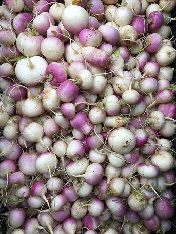 turnip2.JPG