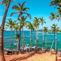 Mirissa-Beach-Sri-Lanka-_80.jpg