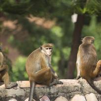 Grounds monkeys.jpg
