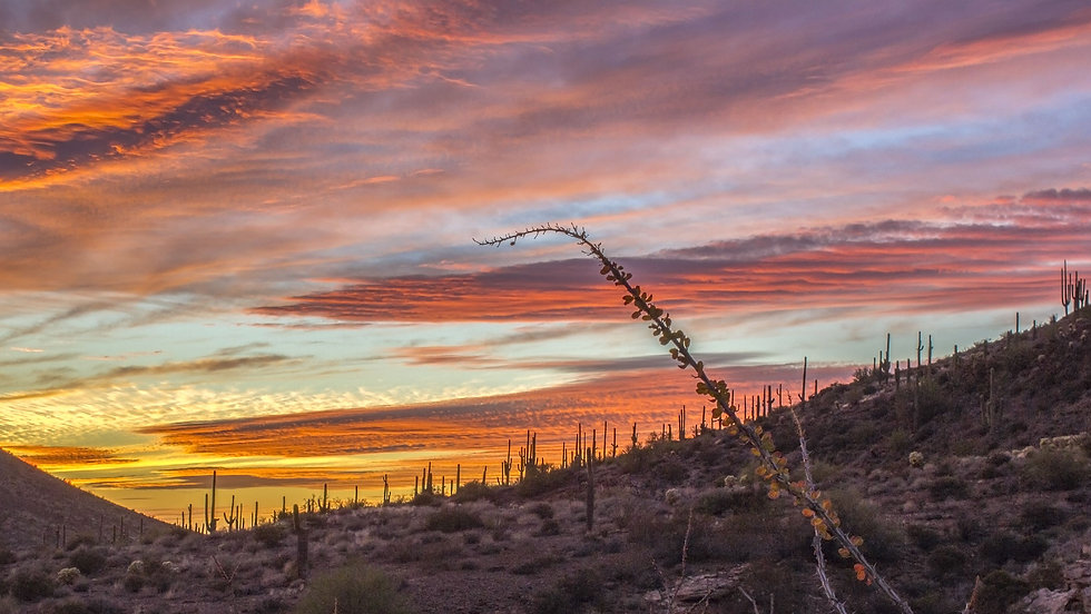 AZ Sunset.jpg