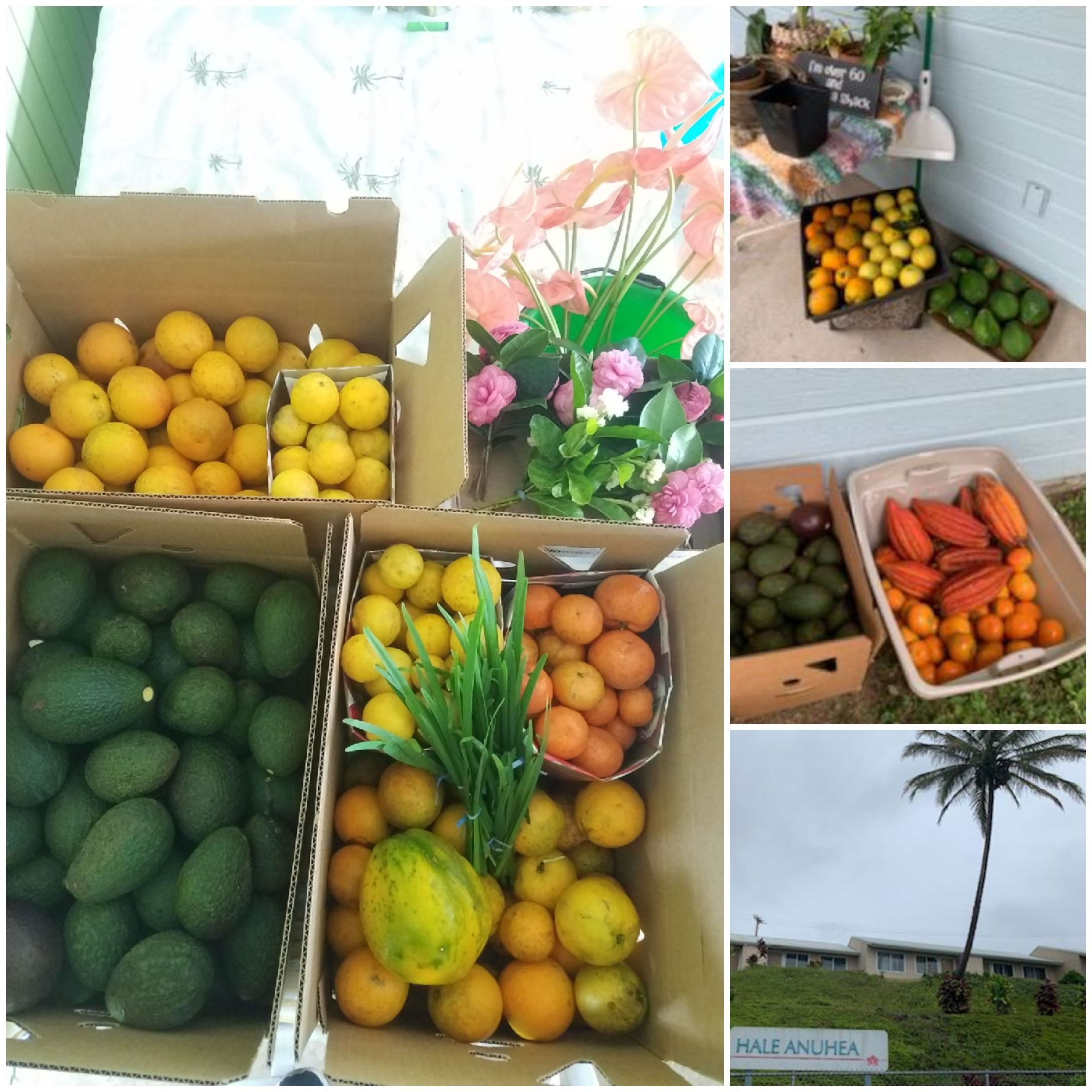 fruit donation