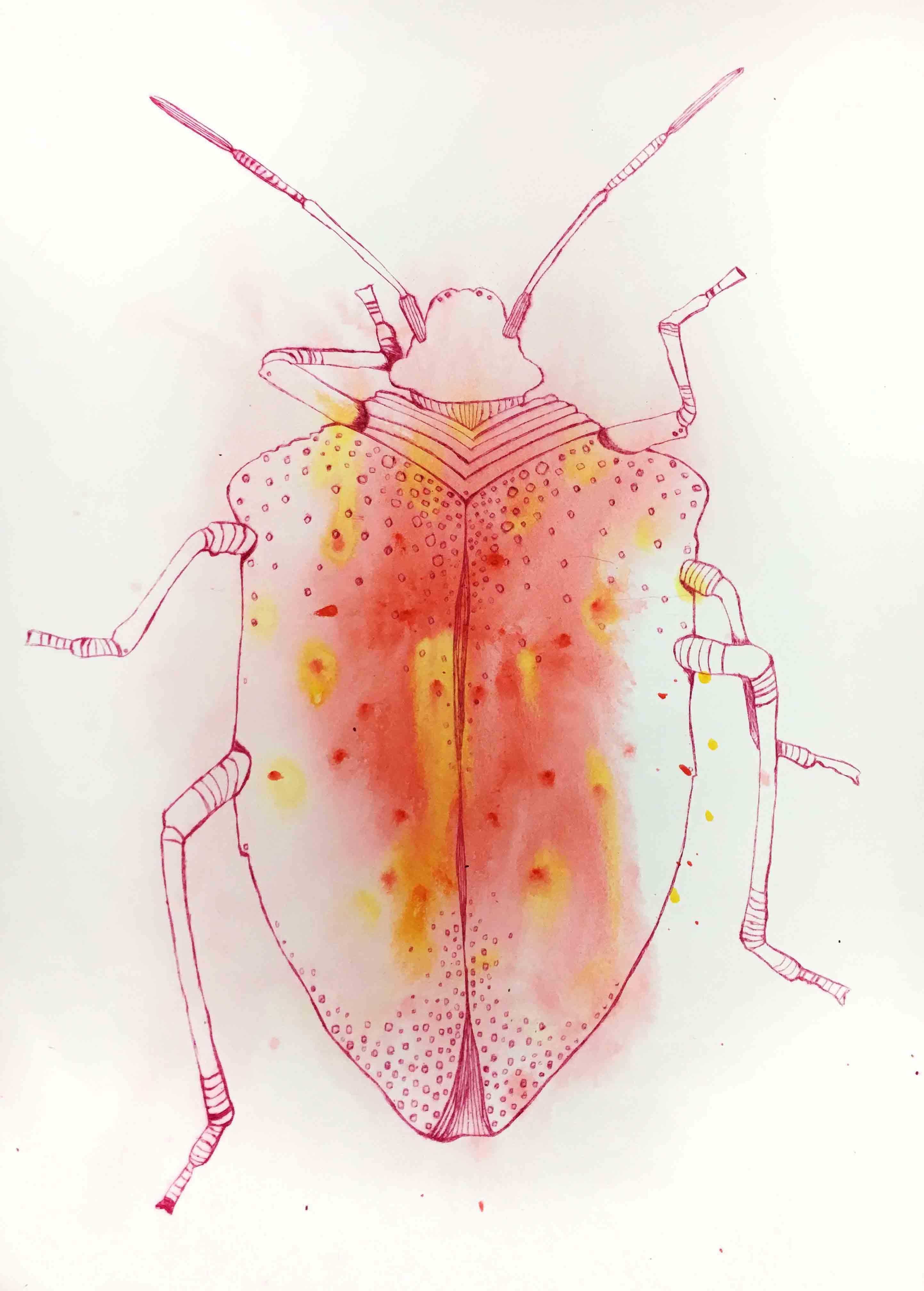 zonkevers