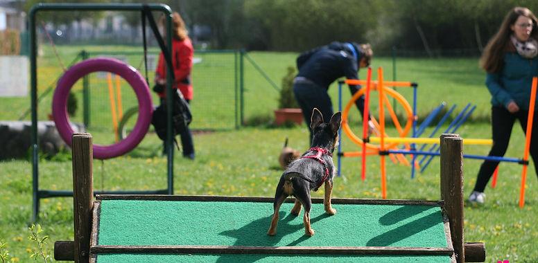 der Trainingsbereicht vom Hundeauslauf Borna