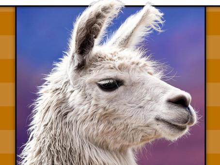 Llama (engelsk)