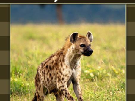 Hyæner