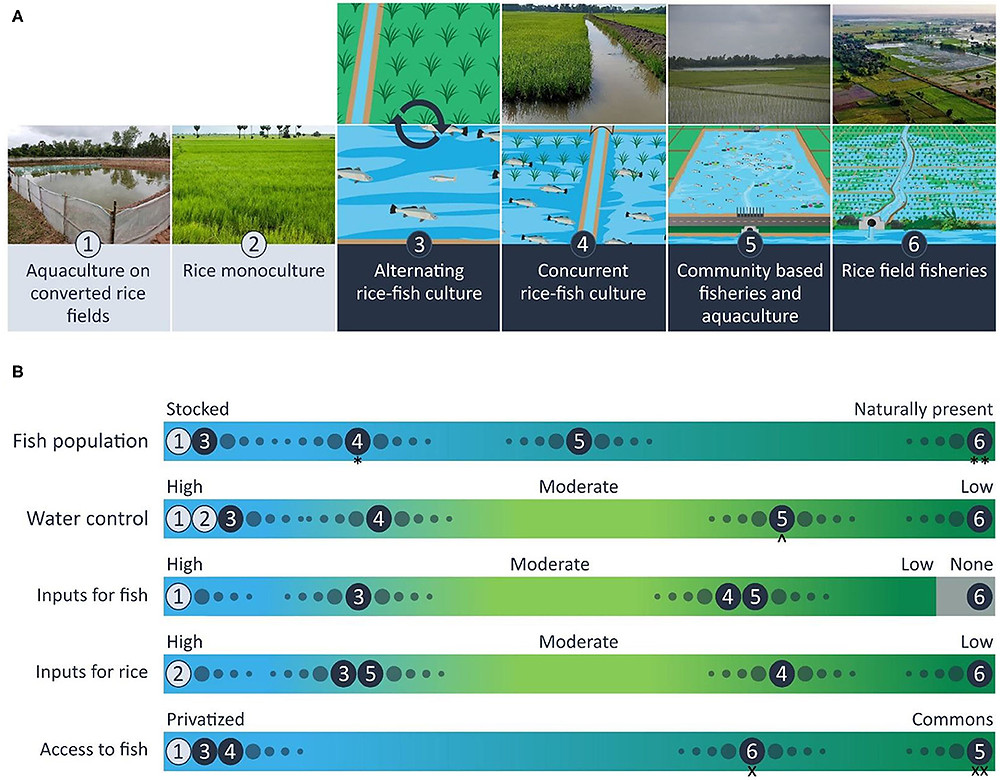 Typology of rice-fish production practices with (A) illustrations and photos that depict each of four exemplars (3–6) and their monoculture reference points (1,2). (B) The types can be distinguished by use of agroecological attributes along a continuum of (high to low) control and substitution of natural processes in terms of; (1) fish stocks, (2) water control, (3) inputs to support fish production, (4) inputs for rice, and (5) institutions that control access to fish.