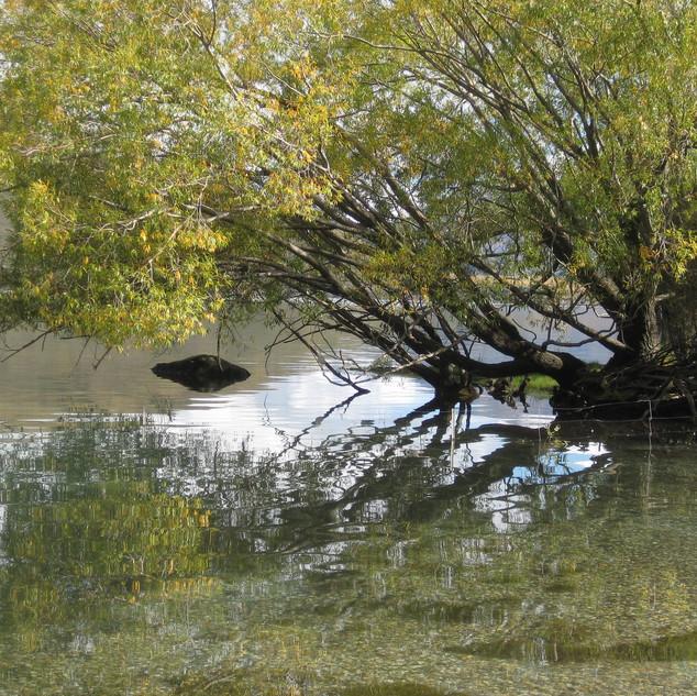 Wanaka lake reflecting tree LS.jpg