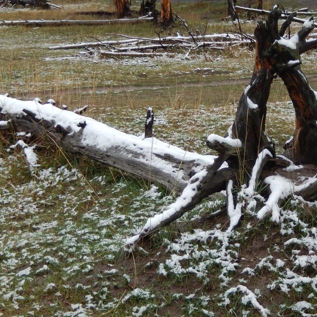 YS snow on tree LS.jpg