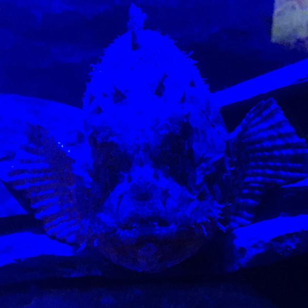 UV fish crop.jpg
