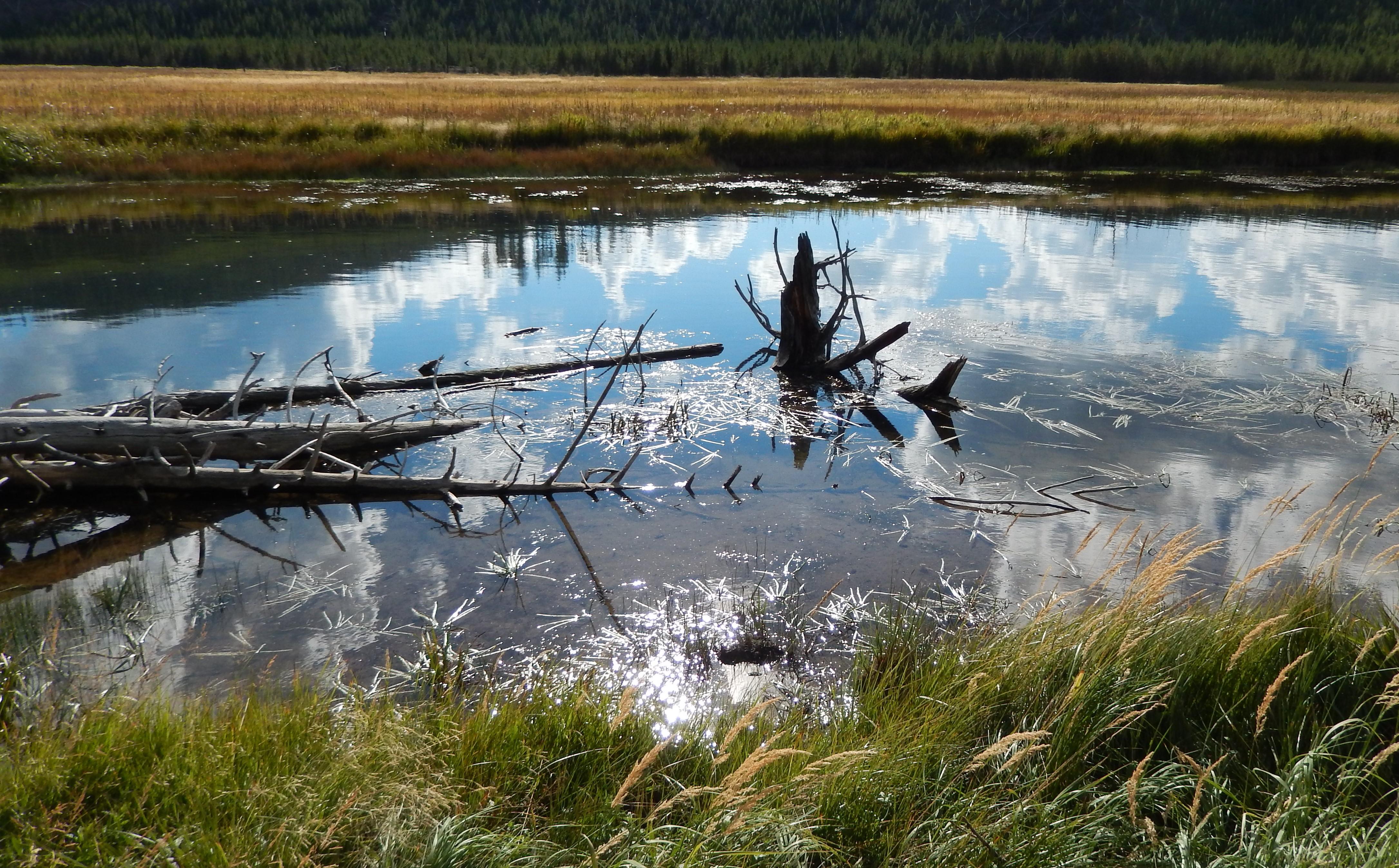 Yellowstone bog LS