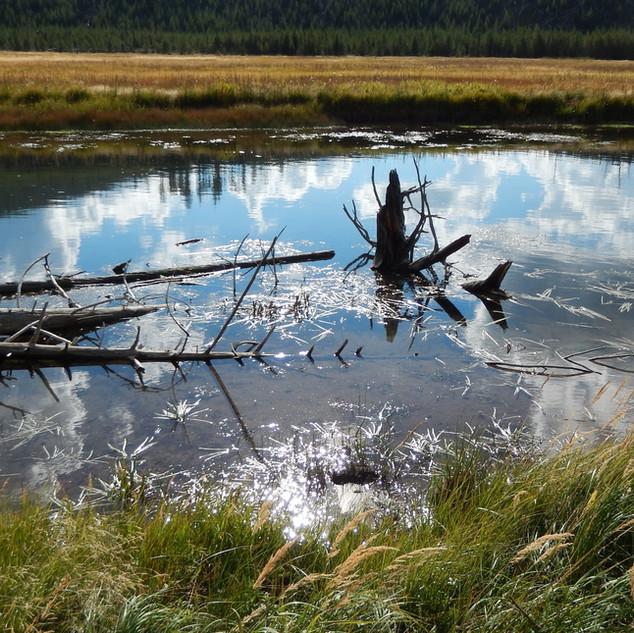 Yellowstone bog LS.jpg