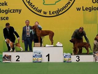 National Dog Show XLI Zimowa Wystawa Psów Rasowych Nowy Dwór Mazowiecki