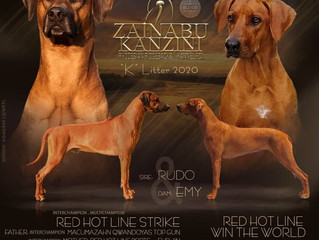 """PLANOWANY MIOT """"K"""" LITTER 2020! RED HOT LINE WIN THE WORLD & RED HOT LINE STRIKE"""