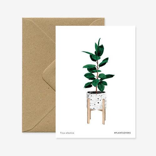 Ficus Elastica Plant Card