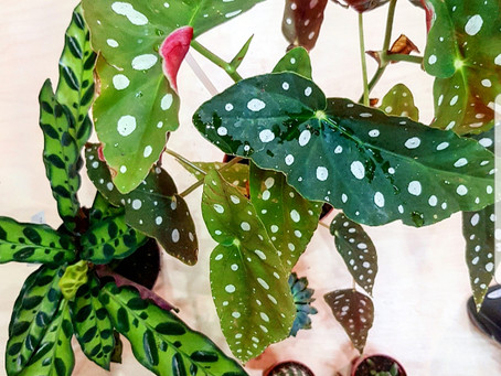 Our How-To for House Plant Happiness