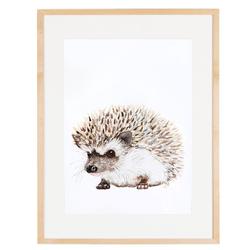 Hedgehog enmarcada varilla chata 1,5 passpartou 4 cm 30x40
