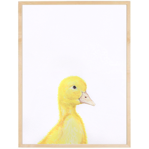 Pato enmarcada varilla chata 1,5  20x30