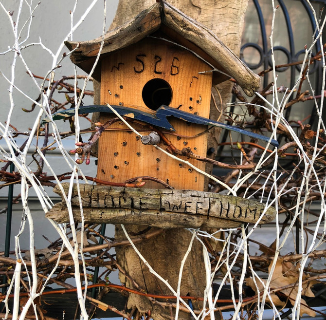 The Pigeon Palaces of NYC
