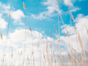 Rhume des foins et allergies saisonnières: traitement en acupuncture