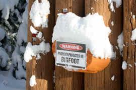 bigfoot warning sign