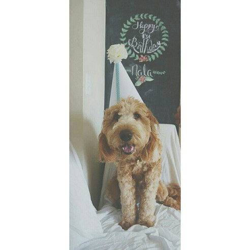 Our Nala's First Birthday!
