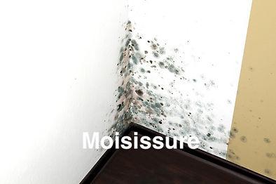 moisissure.jpg