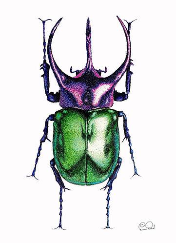 Atlas Beetle A2