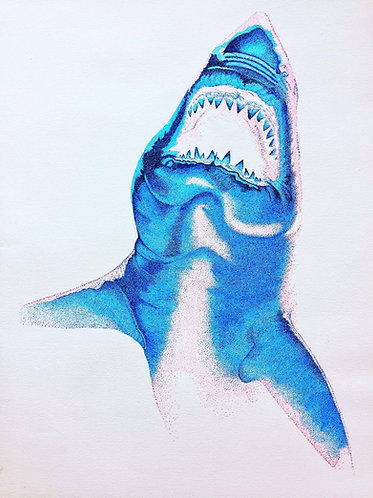 Blue Shark - Print