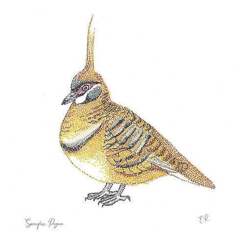 Spinifex Pigeon 11cm x 11cm