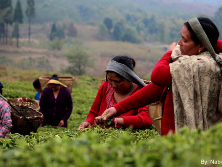 2% of Sells to Tea Farmers