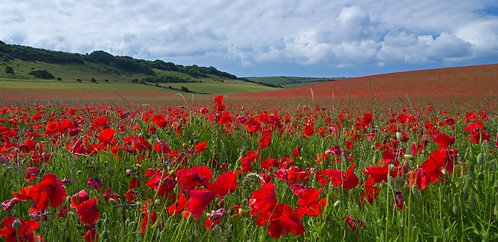 South Downs Poppies by Joff Harms