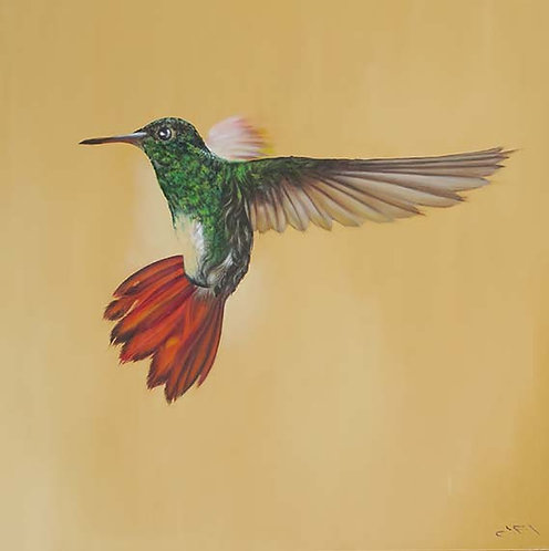 Hummingbird by Jill Iliffe