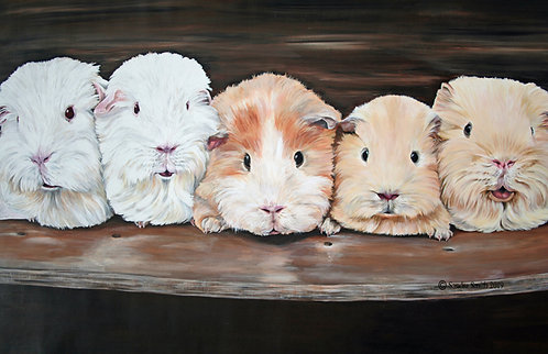 Guinea Pigs by Sandra Smith