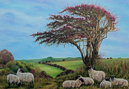 Downs View with Sheep jpeg gallery.jpg
