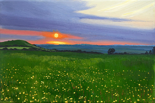 Buttercups at sunset by Emily Grocott