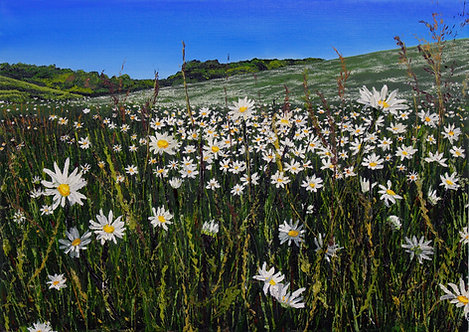 Giclee Print of May Daisy Meadow by Emily Grocott