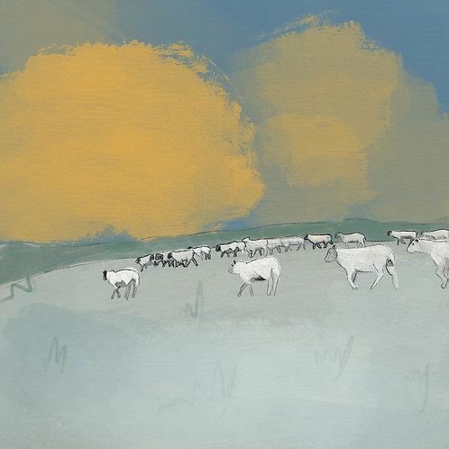 Sheep at Birling Gap by Samantha Hall