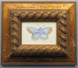 butterfly 2 smaller