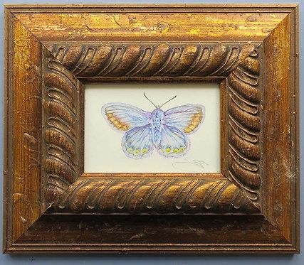 Blue Butterfly by Jill Iliffe
