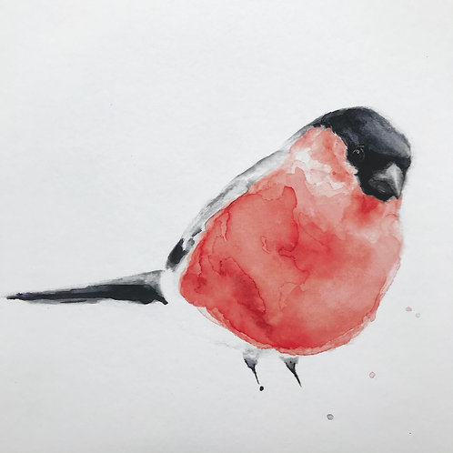Bullfinch by Emma Gillo